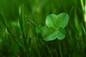 chance trèfle vert